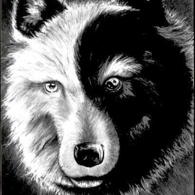 jin jang wolf
